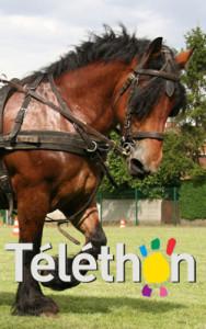 olive-telethon
